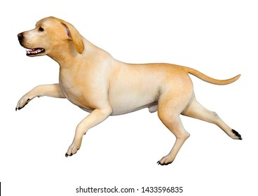 3D rendering of a yellow labrador dog isolated on white background