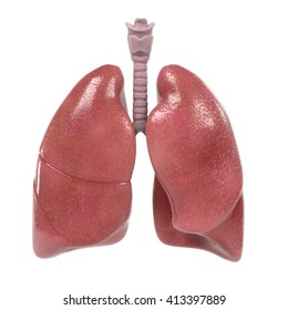 3d renderings of human respiratory system