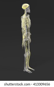 3d renderings of nervous system