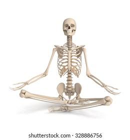 3d skeleton meditating