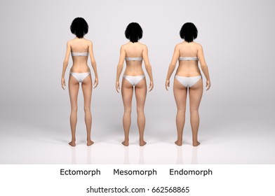 3d standing female body type illustration : ectomorph (skinny type), mesomorph (muscular type), endomorph(heavy weight type) ,Back View