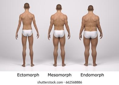 3d Standing Male Body Type Illustration Ectomorph Skinny Mesomorph Muscular
