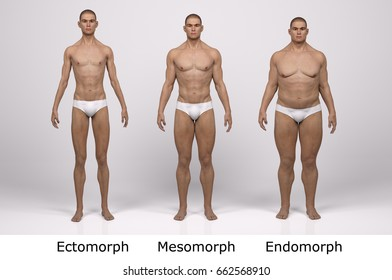 3d standing male body type illustration : ectomorph (skinny type), mesomorph (muscular type), endomorph(heavy weight type),Front View