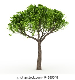3d tree isolated on white