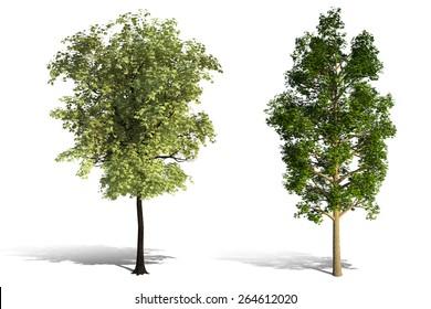 3D tree render on white background
