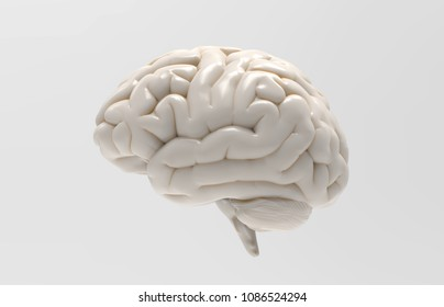 3D white glossy brain rendering isolated on gray background with clipping path for use in any backdrop