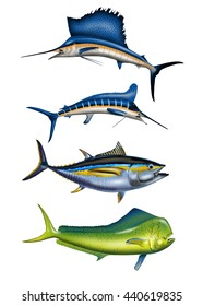 4 DEEP SEA SPORT FISH: SWORDFISH, MARLIN, TUNA, DOLPHIN DETAILED ART! Sport fish with Bold Colors and Nice Detail! Easy to Clip and Paste. Great for T-Shirt Designs, Websites, Brochures, etc. Enjoy!