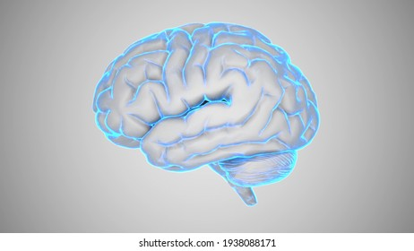 4k 30fps seamless loop AI Brain Concept. Artificial Intelligence, neuronets. 360 rotating. futuristic hologram of brain on a black background and glowing blue. Digital Brain big Data.