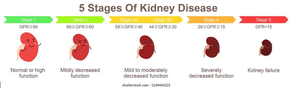 5 stages of kidney disease