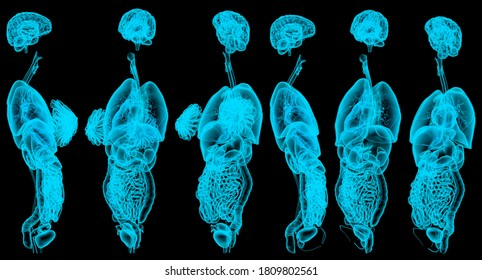 6 x-ray or hologram renders of male and female internal organs - anatomical concept for healthcare - digital high detailed medical 3D illustration isolated