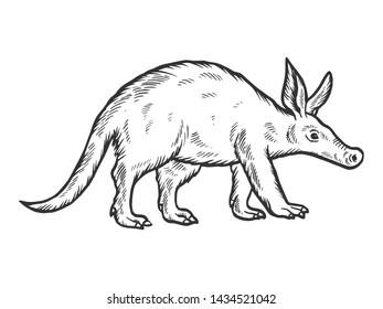 Aardvark animal sketch engraving raster illustration. Scratch board style imitation. Hand drawn image.