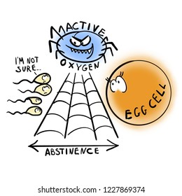 Abstinence and fertility. Egg cell.