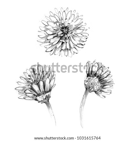 abstract black and white flower drawn in pencil graphic on paper isolated for modern greeting card