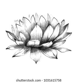 Lotus Flower With Leaf Pencil Drawing Stock Illustrations