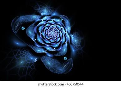 Abstract colorful rose flower on black background. Fantasy blue fractal design for postcards or t-shirts. 3D rendering.