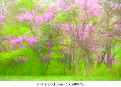 Abstract of Eastern redbud trees (binomial name: Cercis canadensis) in bloom near lawn at edge of woods in spring, with digital painting effect
