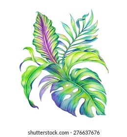 abstract exotic jungle foliage, assorted tropical leaves watercolor illustration isolated on white background