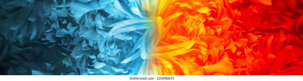 Abstract Fire and Ice element created from flower petals using color theme against (vs) each other background. Heat and Cold  concept