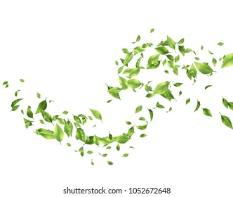 Abstract foliage background. Green flying Leaves on white background