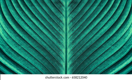 Abstract green stripes texture background, Details of large foliage