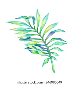 abstract green tropical palm leaf, watercolor illustration isolated on white background
