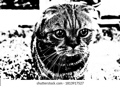 Abstract image of a black and white tabby Scottish Fold cat.