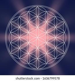 abstract life flower zen background