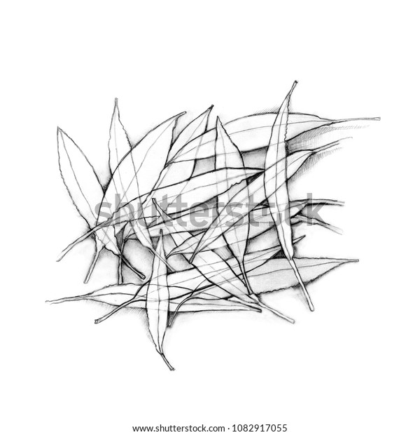Abstract Nature Pencil Drawing Leaves On Royalty Free