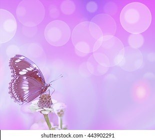 abstract purple bubbles and butterfly card background symbols for life hope love or loss