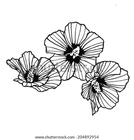 Abstract rose of sharon flower with black artsy lines in the petals in a  doodle clipart
