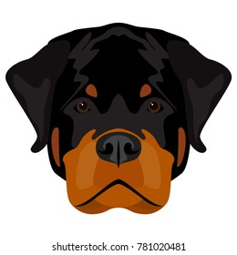 500 Rottweiler Pictures Royalty Free Images Stock Photos And