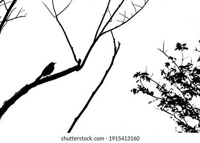 Abstract tree branches isolated on white background with bird