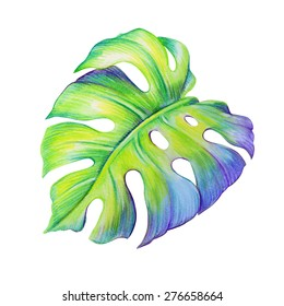 abstract tropical monstera green leaf, watercolor illustration isolated on white background