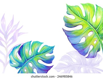 abstract tropical monstera leaves, jungle plants, watercolor illustration isolated on white background
