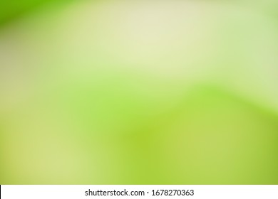 Abstract wallpapers.  Blurred bokeh with green tones