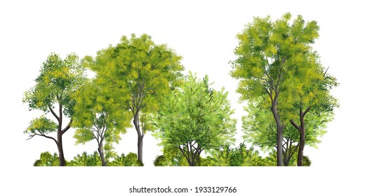 abstract watercolor green tree side view isolated on white background  for landscape and architecture layout drawing, elements for environment and garden, tree elevation