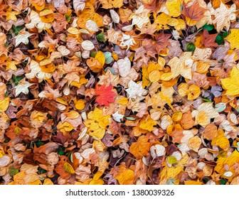 Abtract colourful vibrant autumn leaves illustration graphic art oil colour bush stroke texture background. Nature graphic art wallpaper concept.