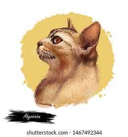 Abyssinian cat isolated on white background. Digital art illustration of hand drawn kitty for web. Aby kitten breed of domestic short haired pet ruddy color and have distinctive ticked tabby coat