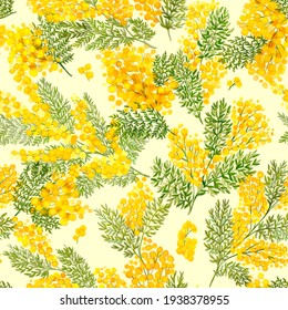 Acacia dealbata, Silver Wattle, mimosa, Yellow fluffy flowers.Spring Seamless pattern. Cosmetic, perfumery and medical plant.