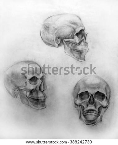 Academic Drawing Penciltraining Figure Anatomy Skull Stock