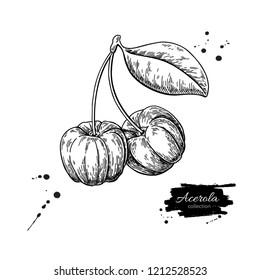 Acerola fruit drawing. Barbados cherry sketch. Vintage engraved illustration of superfood. Botanical branch. Hand drawn icon for label, poster, packaging design.
