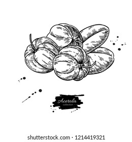 Acerola fruit drawing. Barbados cherry sketch. Vintage engraved illustration of superfood. Hand drawn icon for label, poster, packaging design.