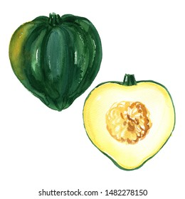 Acorn Squash watercolor drawing on a white background. Drawing of the paints of food.