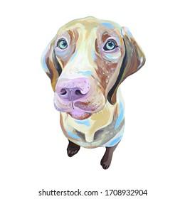 Acrylic illustration of dog face. Hungarian vizsla.