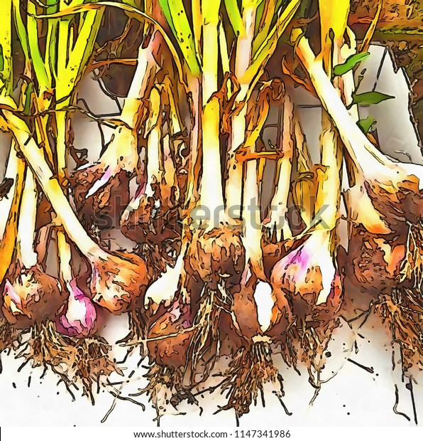 Acrylic painting on canvas art poster in vegetable motif. Contemporary digital big size print in high resolution. Surreal fruit in bright design. Graphic fantasy drawing. Fresh onions.