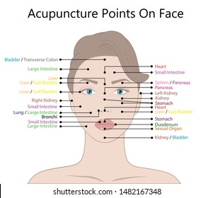 Active acupuncture points on the face,  Illustration Isolated on white background