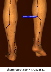 Acupuncture Point BL57 Chengshan, 3D Illustration, Brown Background