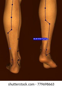 Acupuncture Point BL59 Fuyang, 3D Illustration, Brown Background