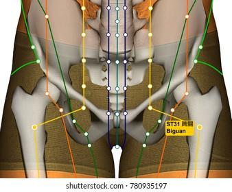 Stomach Meridian Images, Stock Photos & Vectors | Shutterstock