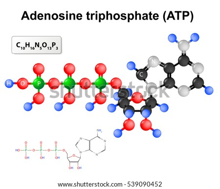 Adenosine Triphosphate Structural Formula Chemical Formula Stock